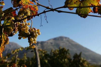 Il Monte Tubenna SA dalla vigna di Mila Vuolo