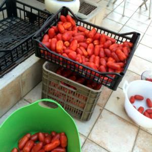 cassette di pomodori san marzano