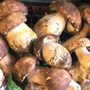 funghi porcini di settembre