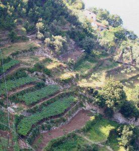 terrazze a vigneto in costiera amalfitana