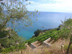 vigne e piante di olivo in costa d'amalfi